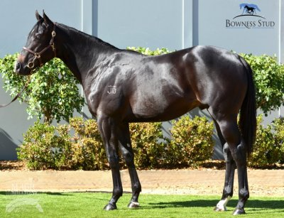 Denman Colt Purchased at Magic Millions