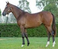 Hinchinbrook Filly